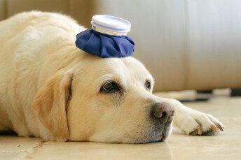 Как да опазим кучето си от летните горещини ?