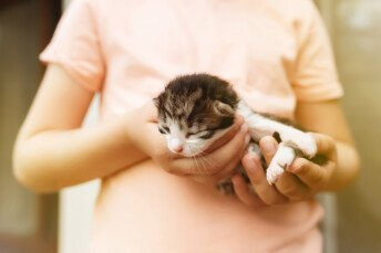 Новородени котенца на хоризонта – как да ги отгледаме, когато нямат майка?