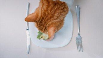 Лакомства за котки – какво трябва да знаем за тях.